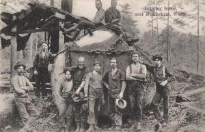 Logging_Scene_Near_Bellingham-_WA.img_assist_custom-600x387